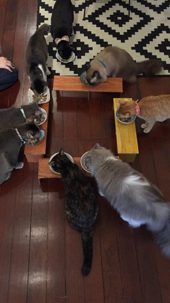 company-of-cats-singapore