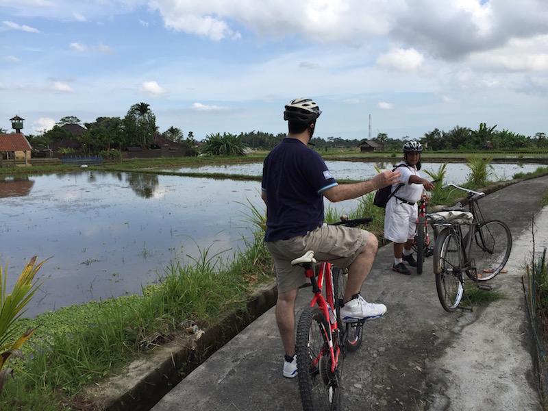 ubud rice padi fields