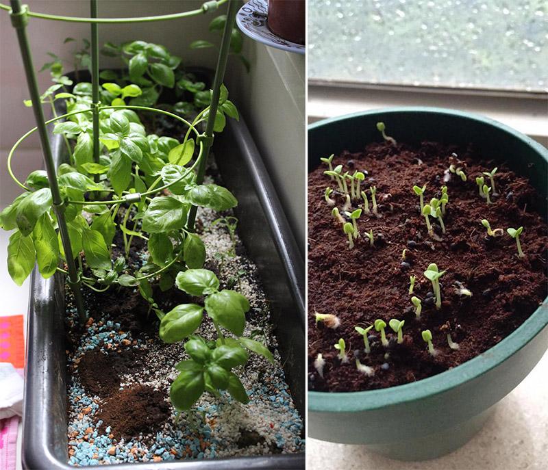gardening indoors copy