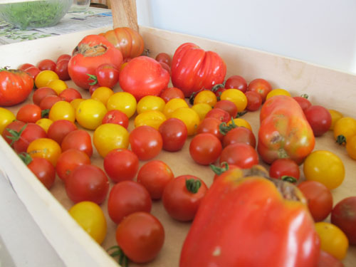 tours france summer tomatoes